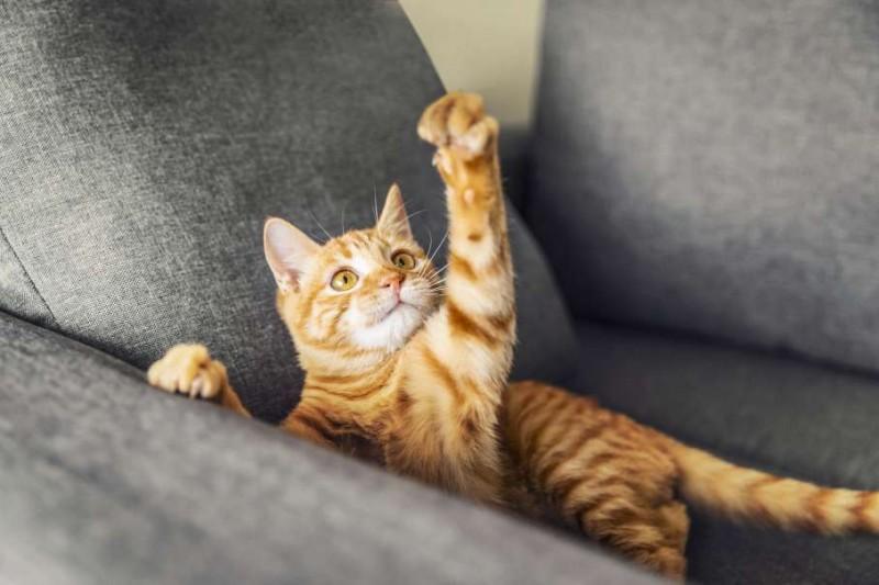 有趣諺語分享「豬來窮,狗來富,貓來開當舖」你聽過了嗎?